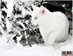 poezie-iarna.JPG (801×621)