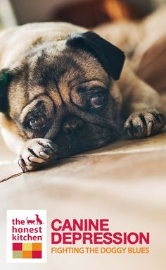 Canine Depression: What To Do When Your Canine Gets The Blues | The Honest Kitchen