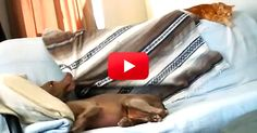 This Dog's Sigh Of Contentment After Stealing The Blanket From The Cat Is Too Funny! Watch At 0:16! | The Animal Rescue Site Blog