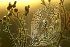 8 Silkily Engineered Facts About Spider Webs | Mental Floss