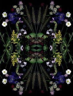 Cornell's Craig Cramer scans flowers for Garden Blogger Bloom Day.
