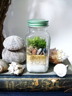 Nature Study Terrarium: Layered Natural Elements in Spice Jar