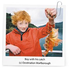 Fishing in Marlborough Sounds, NZ