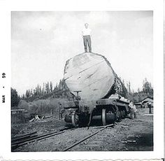 Oregon logging history - Google Search