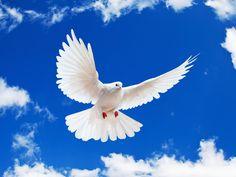 Christian Dove Clip Art | holy+spirit Holy Spirit Christian Clip ...