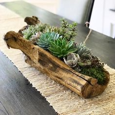 Ethically sourced driftwood is filled to the brim with an array of succulents in varying colors and textures. Plants are surrounded with micro river pebbles and living moss to ensure soil health… Succulent Planter Diy, Succulent Gardening, Succulent Arrangements, Diy Planters, Planting Succulents, Container Gardening, Log Planter, Planter Ideas, Succulent Display