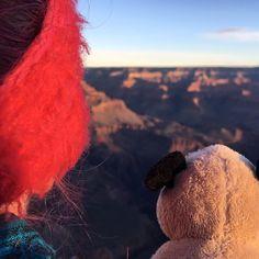 Mr. Pug and his human traveling companion enjoy the view of the Grand Canyon in the morning light. ——————————————  #pug #pugs #morning #sunrise #mrpug #travel #grandcanyon #view #companion #roadtrip