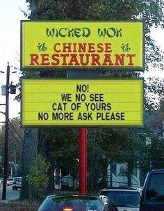 We no see cat ...