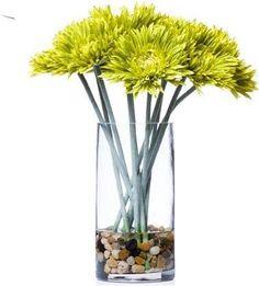 Green Spider Daisy In Cylinder Waterlike Faux Flower Arrangements, Faux Flowers, Glass Vase, Daisy, Spider, Green, Home Decor, Fake Flowers, Spiders