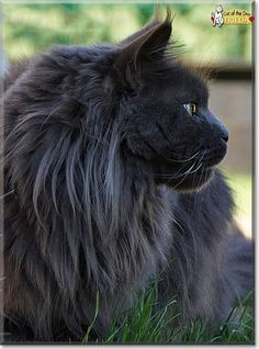 awesome Cat of the Day - Every day a new cat photo and story since 1998. Check more at https://speeddating.tn/cat-of-the-day-every-day-a-new-cat-photo-and-story-since-1998/