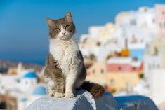 Always wanted to visit Greece for the kitties