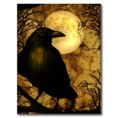 $$$ This is great for          My Raven Postcard           My Raven Postcard today price drop and special promotion. Get The best buyDiscount Deals          My Raven Postcard lowest price Fast Shipping and save your money Now!!...Cleck See More >>> http://www.zazzle.com/my_raven_postcard-239345461066592602?rf=238627982471231924&zbar=1&tc=terrest