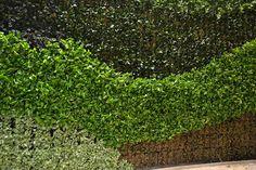 Newly installed modular living wall. Green Walls, Stepping Stones, Interior, Garden, Outdoor Decor, Plants, Home Decor, Stair Risers, Garten