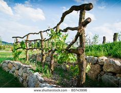 Wooden Grapevine Trellis by Dieter H, via ShutterStock