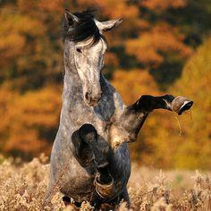 Play #horses