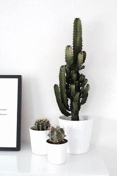 10 Chill Indoor Plants for Minimalist . 10 Chill Indoor Plants for Minimalist Homes Ed Wallpaper, Dulux Valentine, Cactus House Plants, Decoration Plante, Plants Are Friends, Deco Floral, Cactus Y Suculentas, Cactus Flower, Cactus Cactus