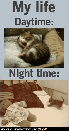 So true. LOL Cats are perfection tho