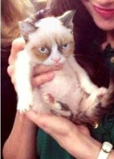 Grumpy Cat as a kitten