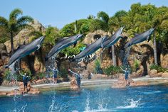 Dolphins at Sea World - Surfers Paradise, Queensland