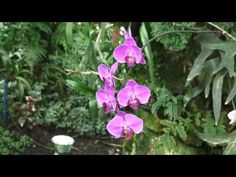 Park Utopia- orchids,Israel/פארק אוטופיה - YouTube