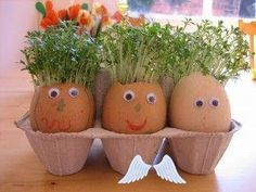 Eggheads with cress hair - NurtureStore Egg Heads<br> We make these Eggheads with cress hair every year because the kids think they're so funny. If you get them ready four or five days beforehand they will have grown a full head of hair ready for the Easter weekend – which you can then snip off to enjoy with an egg sandwich. […] Cress Heads, Egg Sandwiches, Spring Crafts For Kids, Summer Crafts, Fall Crafts, Christmas Crafts, Diy Ostern, Easter Weekend, Plantar