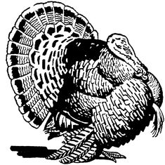 realistic turkey coloring pages size 63 34 kb viewed 3431