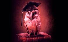 Owl, Bird, Animals, Animales, Animaux, Owls, Birds, Animal, Animais