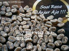 jual biji kopi kandungan biji kopi biji kopi terbaik beli biji kopi tanaman kopi buah kopi biji kopi luwak biji kopi vector