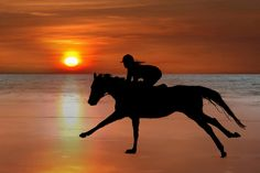 silhouette of a horse and rider galloping on beach by David Morrison, via 500px