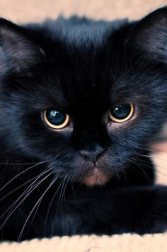 "* * "" Dey say a black kitteh brings bad luck, but dat depends on who comes across it, a human or a mouse."""