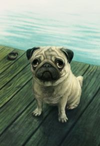 """See our web site for additional details on """"pugs"""". It is actually an excellent spot to learn more. Best Dog Photos, Cute Dog Photos, Funny Dog Pictures, Pug Photos, Fu Dog, Dog Cat, Pug Illustration, Pug Tattoo, Pug Rescue"""