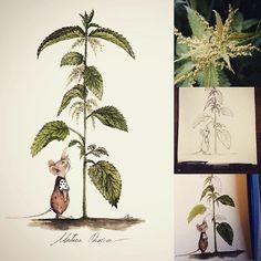 Urtica dioica #urtica #urticadioica #ortica #officinalplants #plants #green #greenplants #leaf #littlemouse #sweetmouse #botanicalillustration #botanica #illustrazione #itopidicice