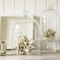 Beachy/neutral decor. White coral under cloche bell jar