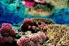 tayrona national park coral reefs - Pesquisa Google