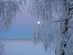 winter finland snow trees moon by vaeltaja