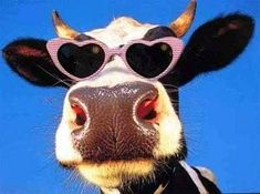 Joke for you: What does the fat cow give you? Cute Baby Cow, Baby Cows, Cute Cows, Cute Little Animals, Cute Funny Animals, Cute Animal Photos, Animal Pictures, Fluffy Cows, Cow Face