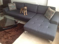 Ben's dog Dexter seems to be pleased with his new Vittorio corner sofa.