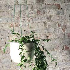 ODD STANDARD Blom Planter Pots