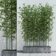 Small Balcony Decor, Balcony Plants, House Plants Decor, Privacy Plants, Back Garden Design, Backyard Garden Design, Bamboo Landscape, Landscape Design, Bamboo Planter