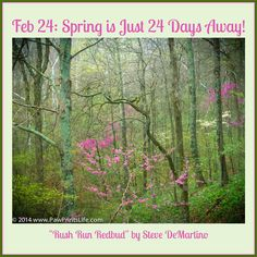 PHOTO OF THE DAY. Feb 24: Spring Is Just 24 Days Away! Here's a photo that my Steve took in Rush Run Wildlife Area near Camden, Ohio. This was probably taken in the 1980s. Steve so loved spring! If you'd like to see more of Steve's photos, please comment and repin!