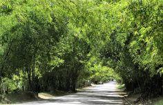 Holland Bamboo Avenue, St. Elizabeth, Jamaica