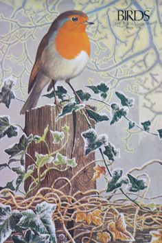 H is for home: illustration of a robin from a vintage 1970s RSPB magazine