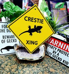 Who owns a gecko!? ❤ We have the perfect fun signs for gecko lovers! 😉😎 In store or online! #MagazooReptiles Fun Signs, Reptile Accessories, Reptiles, Lovers, Pets, Turtle