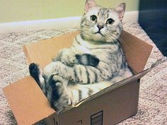 Des chats assis bizarrement - Image