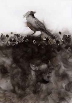 """Ornithocide"" is a series by artist Steven Spazuk that features live and dead birds. Steven Spazuk uses fire and smoke to create amazing illustrations and work of art. Fire Painting, Smoke Painting, Smoke Art, Street Art, Fire Art, Portraits, French Artists, Beautiful Artwork, Painting Techniques"