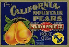 California Mountain Pears