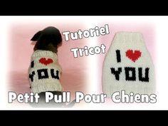 Passion Tricot: Petits pulls pour chiens de petites tailles - YouTube