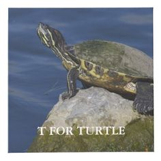 T For Turtle Cube Photo Cubes, Images And Words, Daily Thoughts, Here On Earth, Consciousness, Meditation, Mindfulness, How To Apply, Time Zones