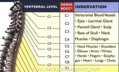 C1-C7 Nerve Root Innervation - nice points show related aches and pain