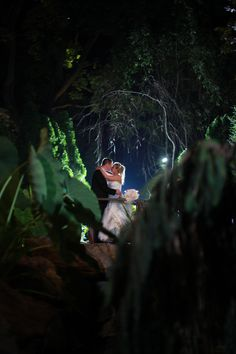 Nighttime kiss hidden in the gardens